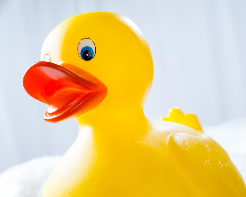 Ducks-031.jpg