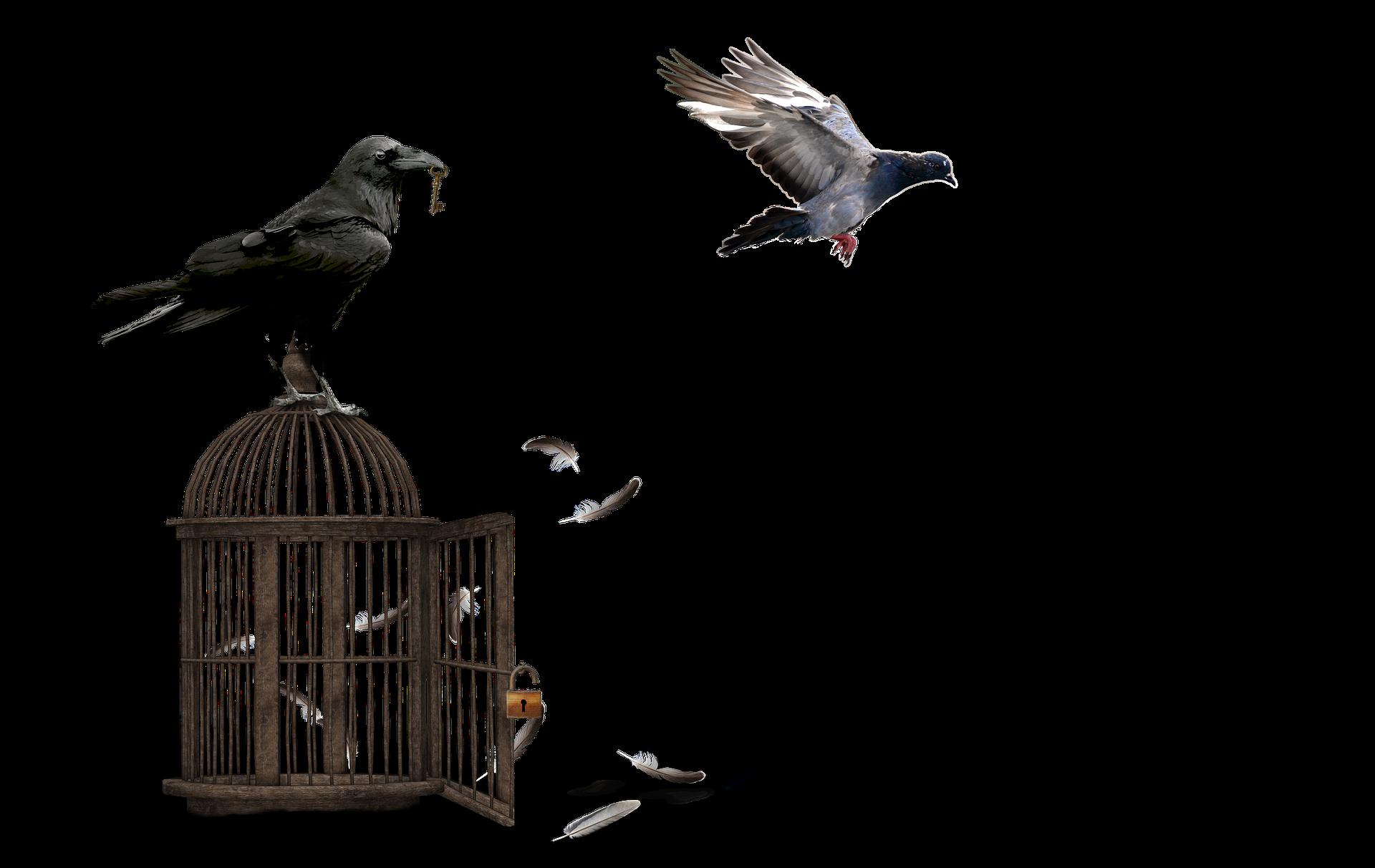 Kärleken till kloka korpar vaknade till liv under ett besök på The Tower of London, hemvist för heliga korpar sedan hundratals år   Bild av    Marianne Sopala    från    Pixabay