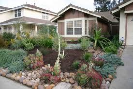 drought tolerant yard