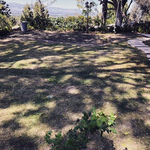 Before artificial grass installation