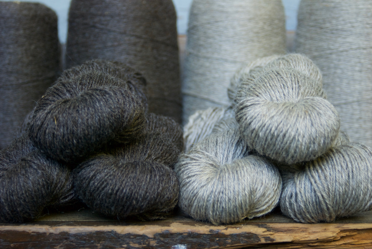 The two natural colors of my 2016 Coopworth Gansey yarn - lovely undyed, and gorgeous after a few dips in the indigo vat.
