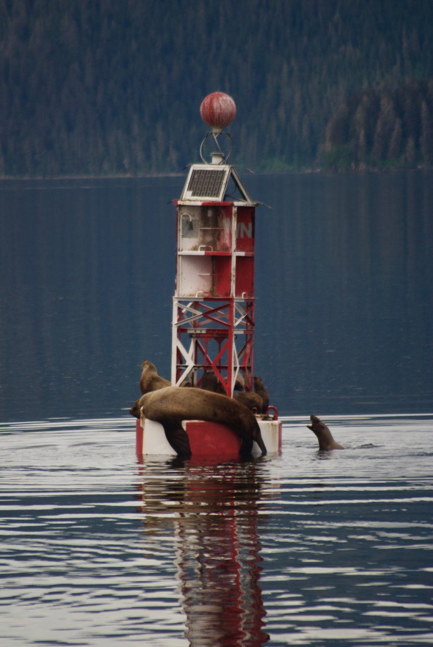 One of the buoys heading into Petersburg.  An important navigational aid, but also a much fought over napping spot for sea lions.