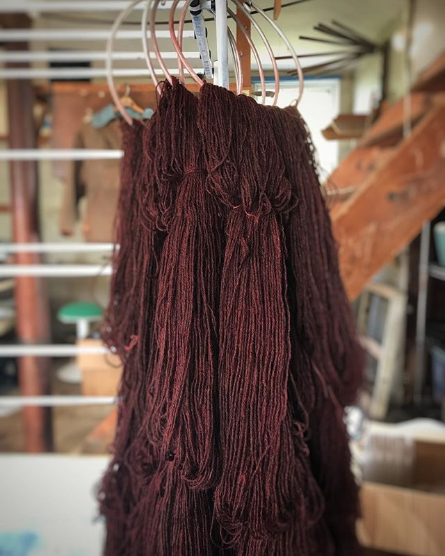 Fresh from rinsing: one dyelot of #coopworthganseyyarn in the Purpleheart colorway. This color was a happy accident the first time I dyed it. Thrilled that I managed it again, deliberately this time🧶. This dyelot was specially requested by a #gansey knitter and is mostly spoken for - but if you are plotting a gansey of your own and would like naturally dyed gansey yarn spun from Maine fleece, please get in touch.  A special thank you to @buckwheatblossomfarm for raising such happy sheep! . #uptonyarns #ganseyknitting #gansey #ganseyyarn #naturaldyer #naturaldyes #localwool #maineyarn #smallfarmyarn #ganseyknittersofinstagram #knitlocal #traditionalknitting #workingknits #naturaldyesnewenglandwool #customdyedyarn #climatebeneficialwool #forestsheep