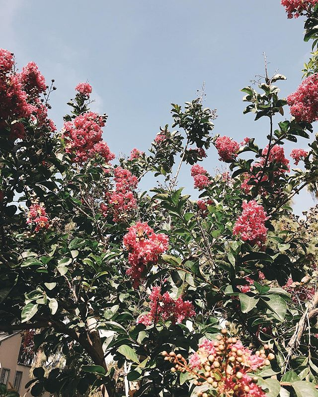 Hey, you. Just a friendly reminder that life doesn't always go the way you plan it, and that's okay. You'll get where you're meant to go, just try and enjoy the ride. 🌺 . . . . . #ocblogger #costamesa #thursdaymotivation #thursdaythoughts #instablooms #bloomstagram