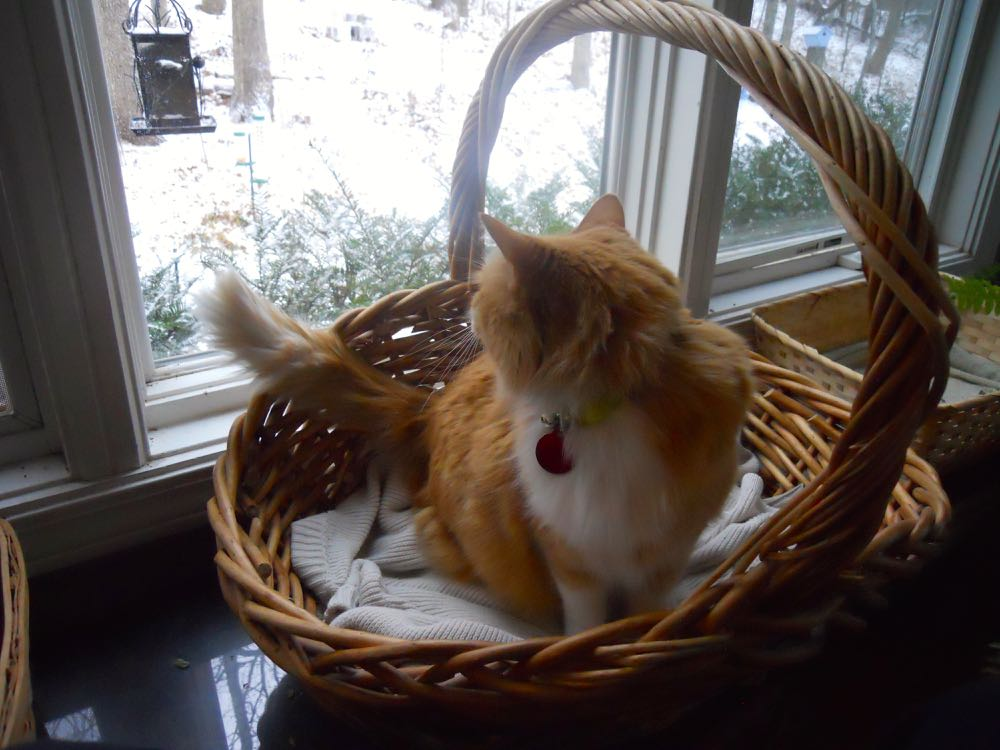 CAT IN BASKET AT WINDOW MAKES FOR A GOOD NAPPING SPOT