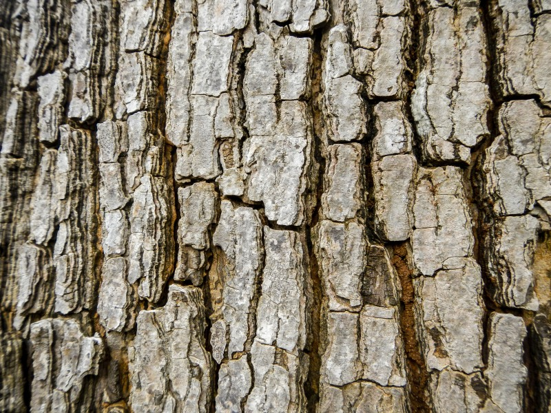 Contoured, weathered, scarred, yet ready to  withstand relentless heat and lashing rain.   The texture brings alive the personality of   the tree trunk.