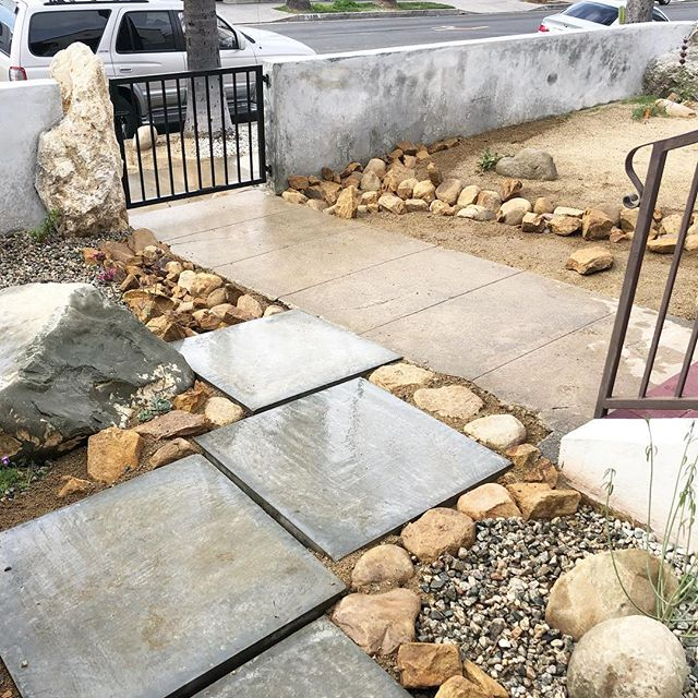 With this amazing 🌧 winter, I needed to go back to this job and install some swales to help capture that water and prevent so much runoff. (All the dg was washing down the stairs 😩). Easy fix though, we just followed the path the water created and trenched in these swales. We used big concrete pavers to create a bridge so trash cans could easily get in and out. So humbling and satisfying to work with nature instead of against her. Also, the wildflowers I sowed are coming up! That one pic has arroyo lupine, CA poppies, desert bluebells, and tidy tips sprouting up! last pic is the before. #livingarray