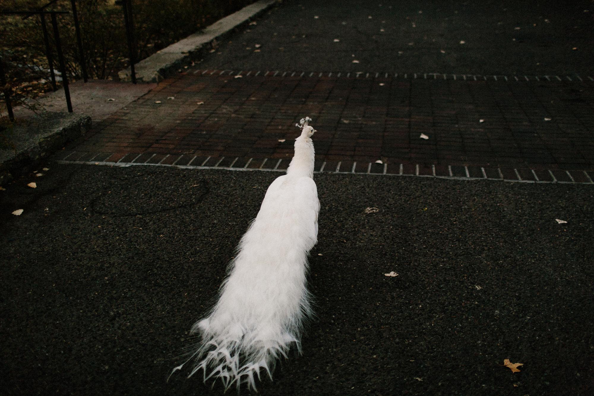043-los-poblanos-wedding--destination-wedding.jpg