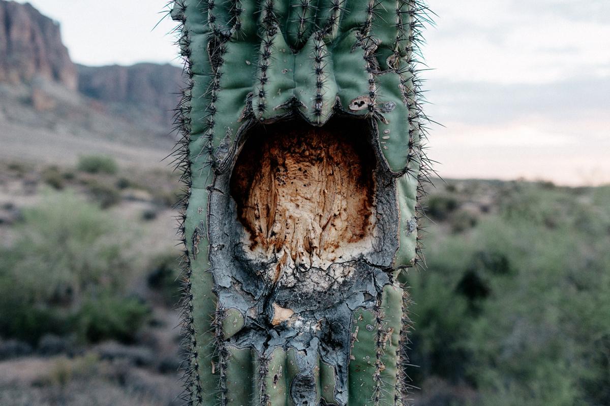 Arizona elopement