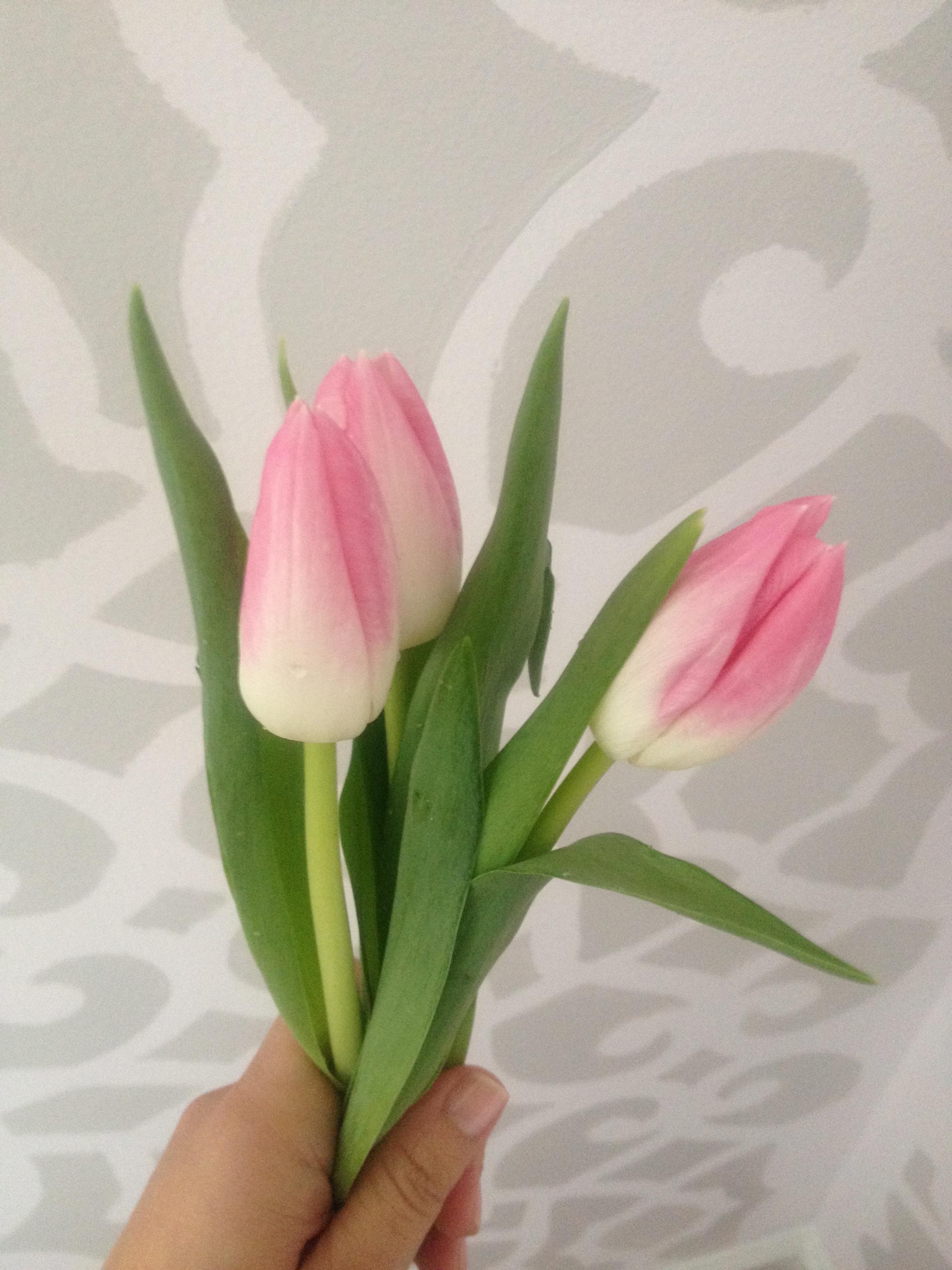 tulips in office progress blog.jpeg