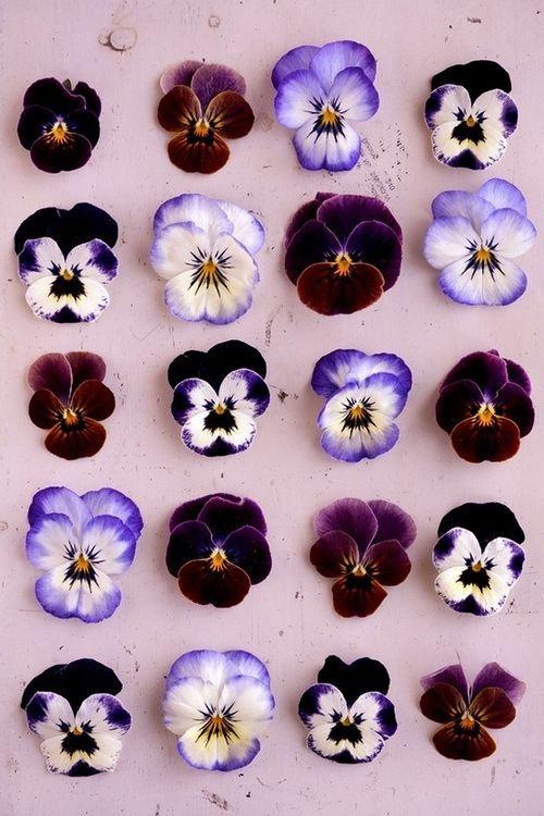 Violets, Violets, Violets