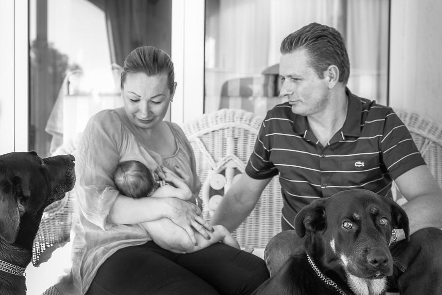 Retrato familia-mamá, papá, bebé y los perros