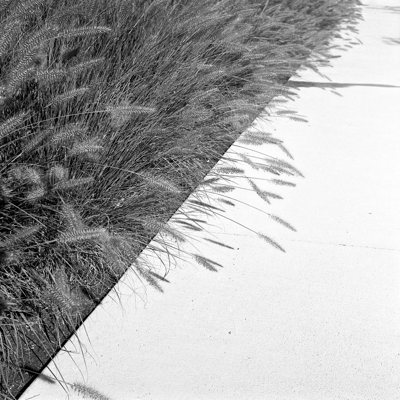 grasses - 1.jpg