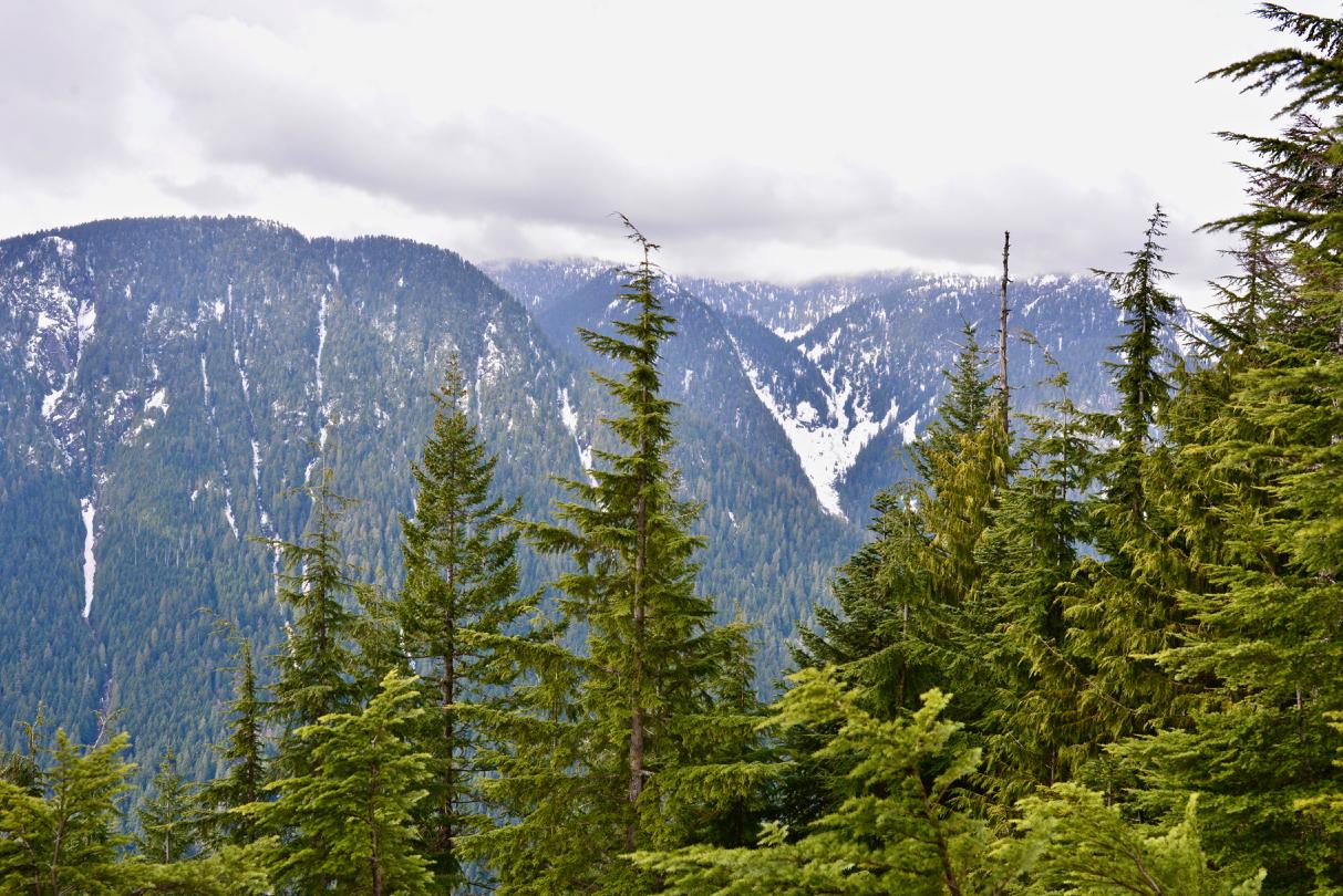 Lynn Peak Hike - 4.jpg