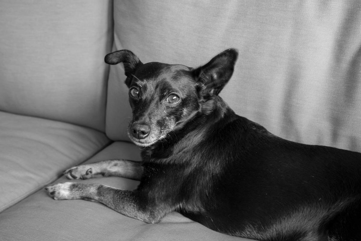 Chunk, little black dog