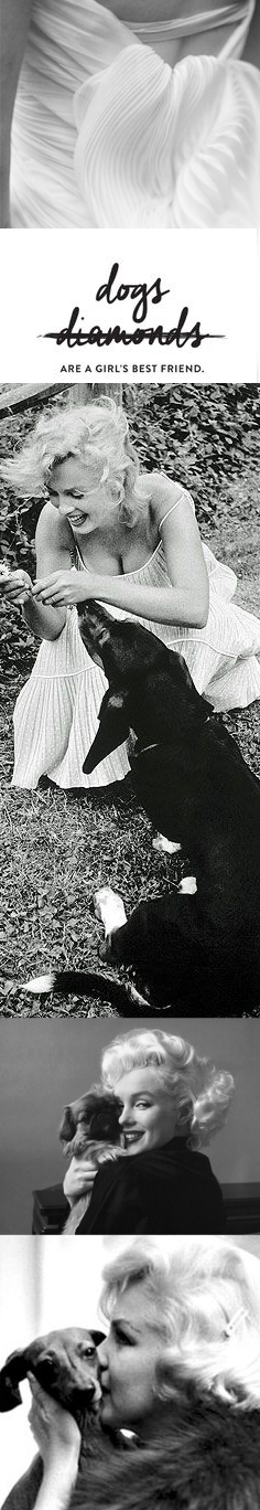 marilyn & dogs.jpg