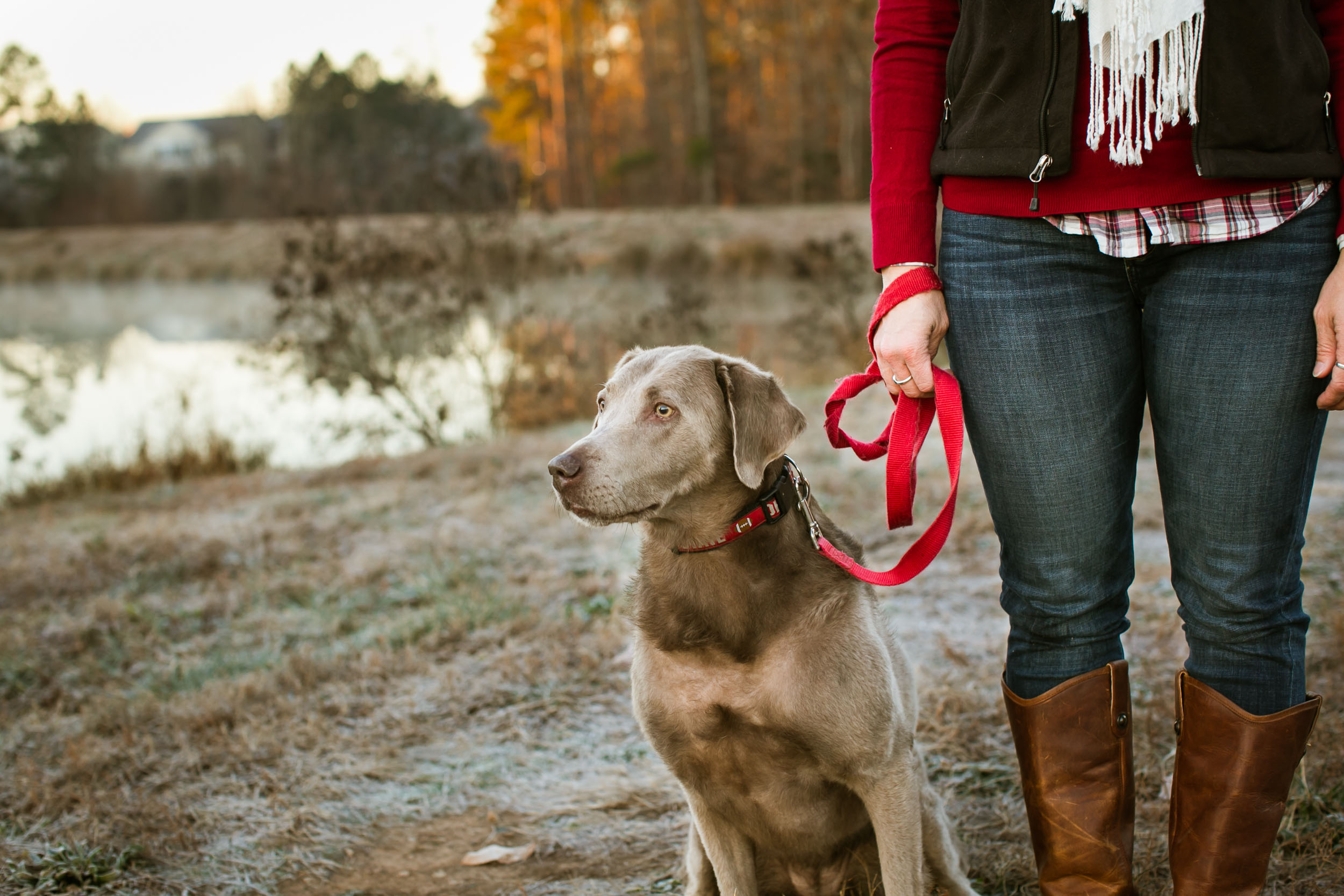 Durham Family Photographer | G. Lin Photography | Dog on leash at park
