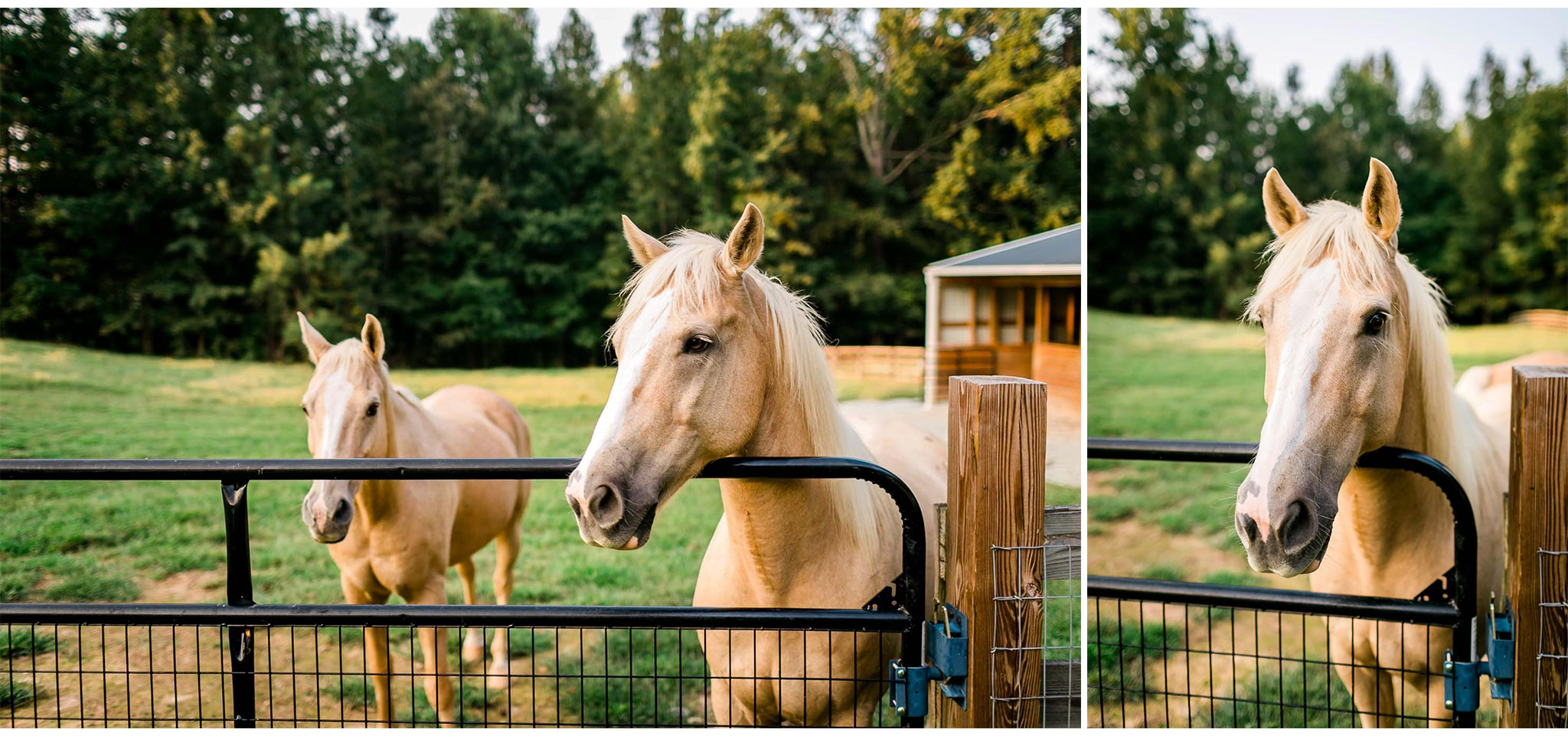 Horses standing in open field | By G. Lin Photography | Durham Photographer