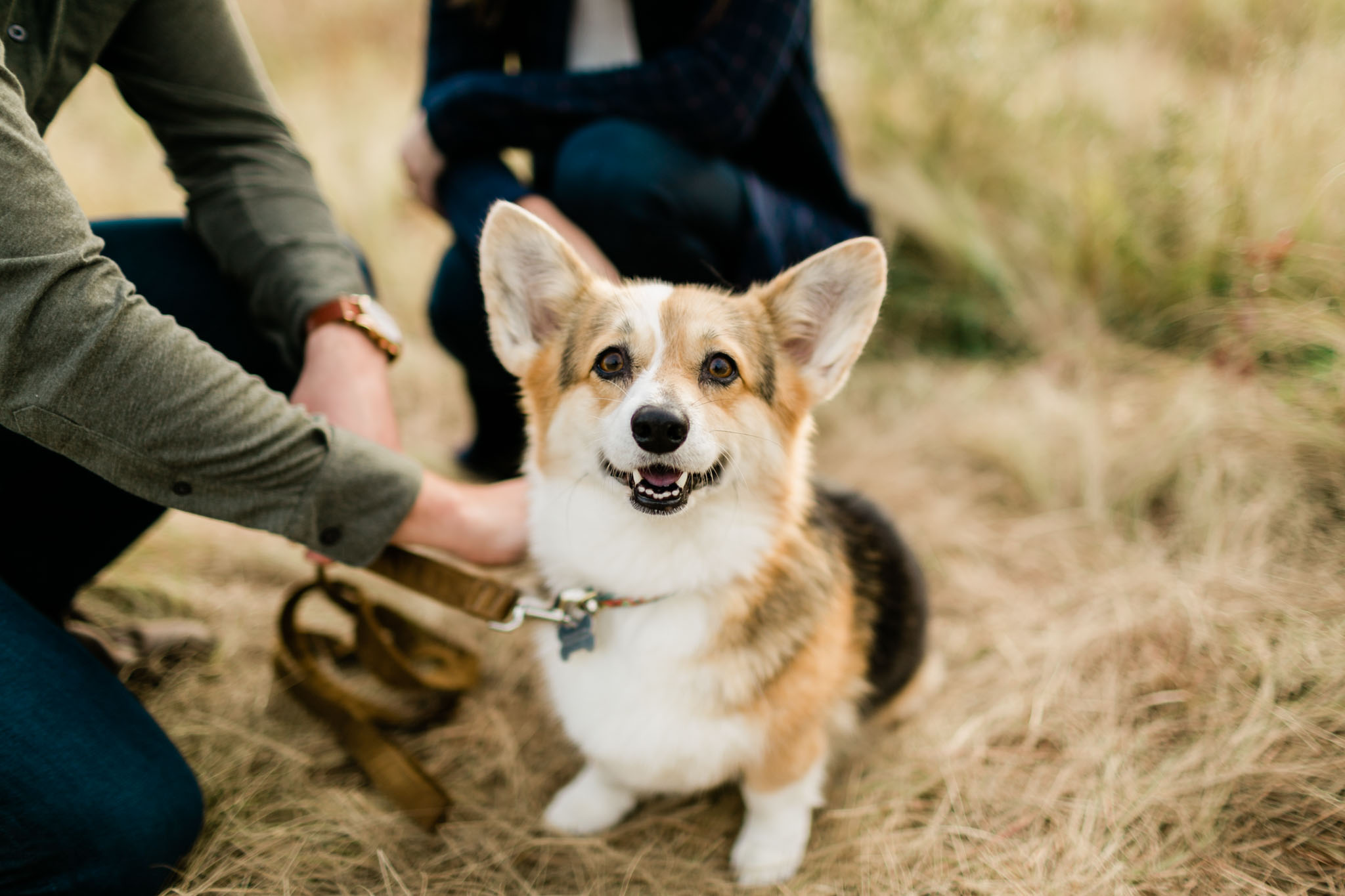Cute corgi portrait in Raleigh | Raleigh Dog Photographer | By G. Lin Photography