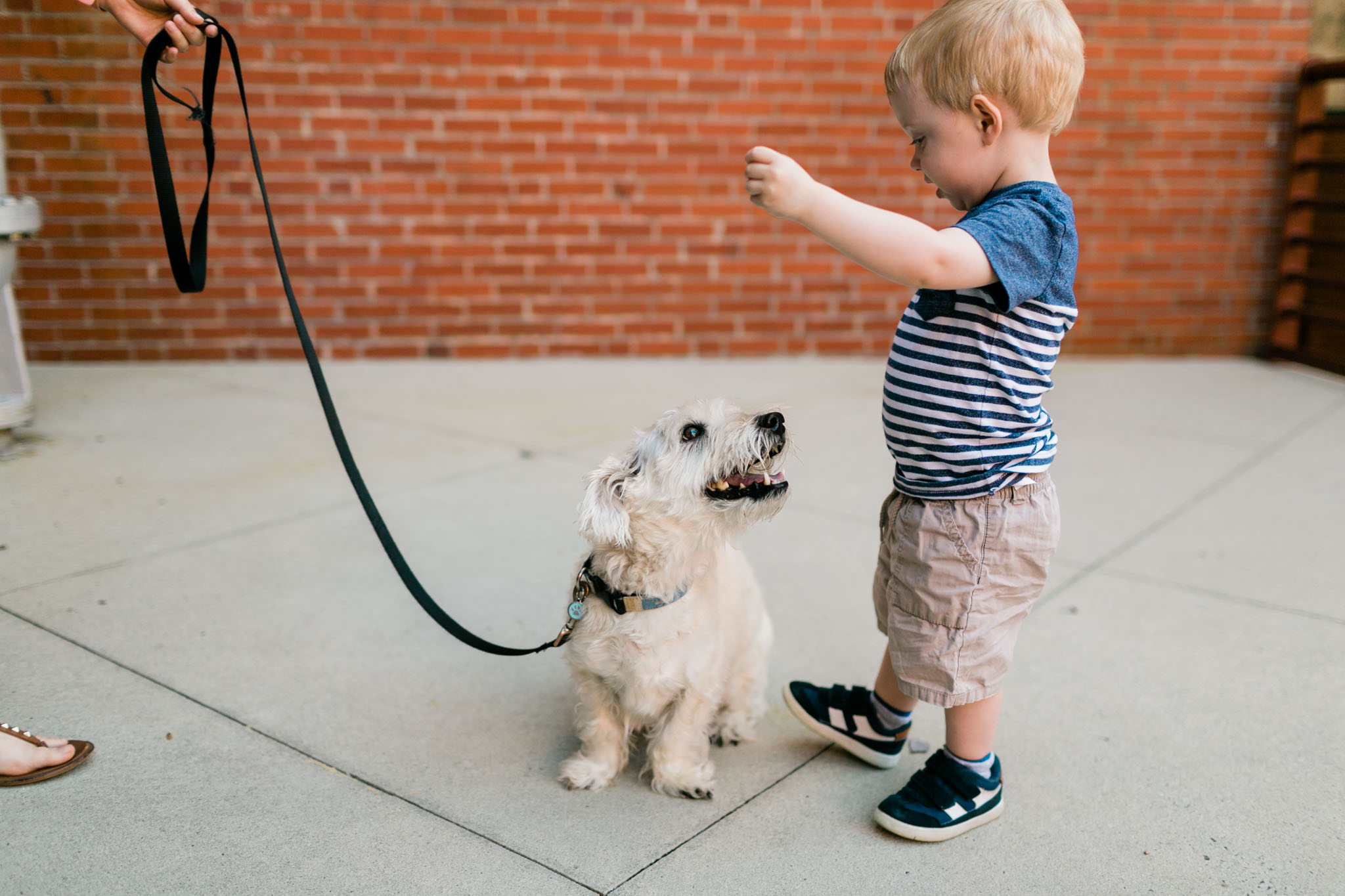 Boy playing with dog outside | Durham Photographer | By G. Lin Photography