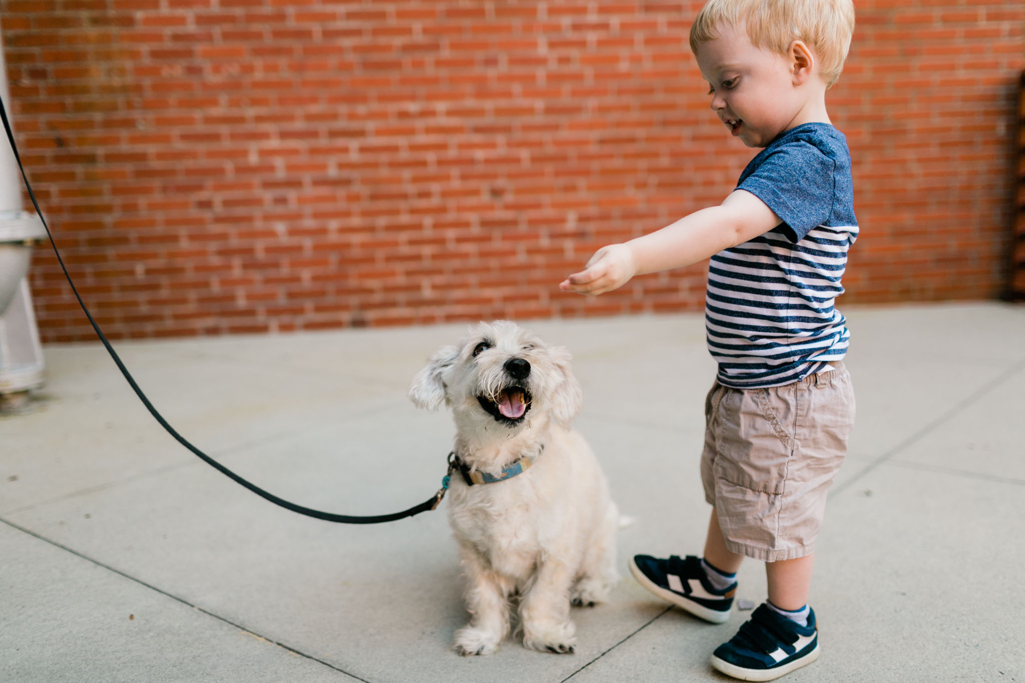 Young boy feeding dog | Durham Photographer | By G. Lin Photography