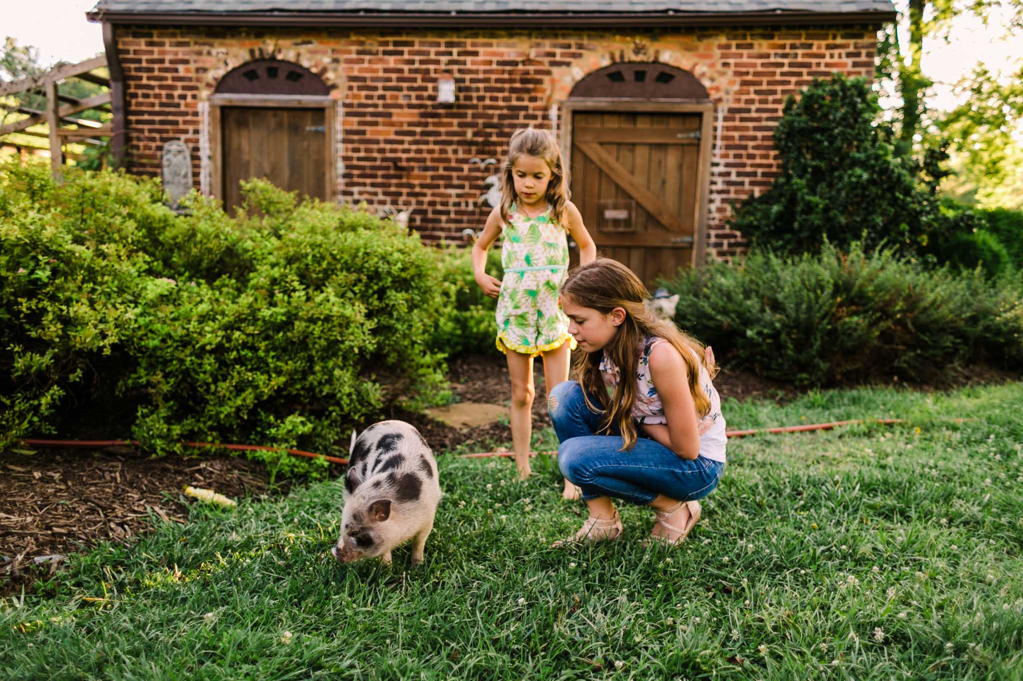 Durham Family Photographer | By G. Lin Photography | Portrait of girls playing with pig outside