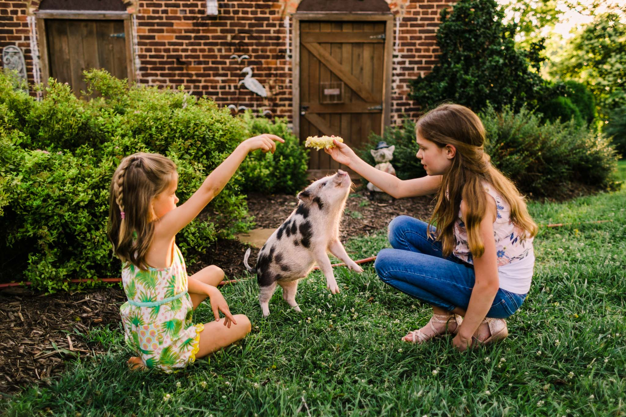Durham Family Photographer | By G. Lin Photography | Miniature pig jumping