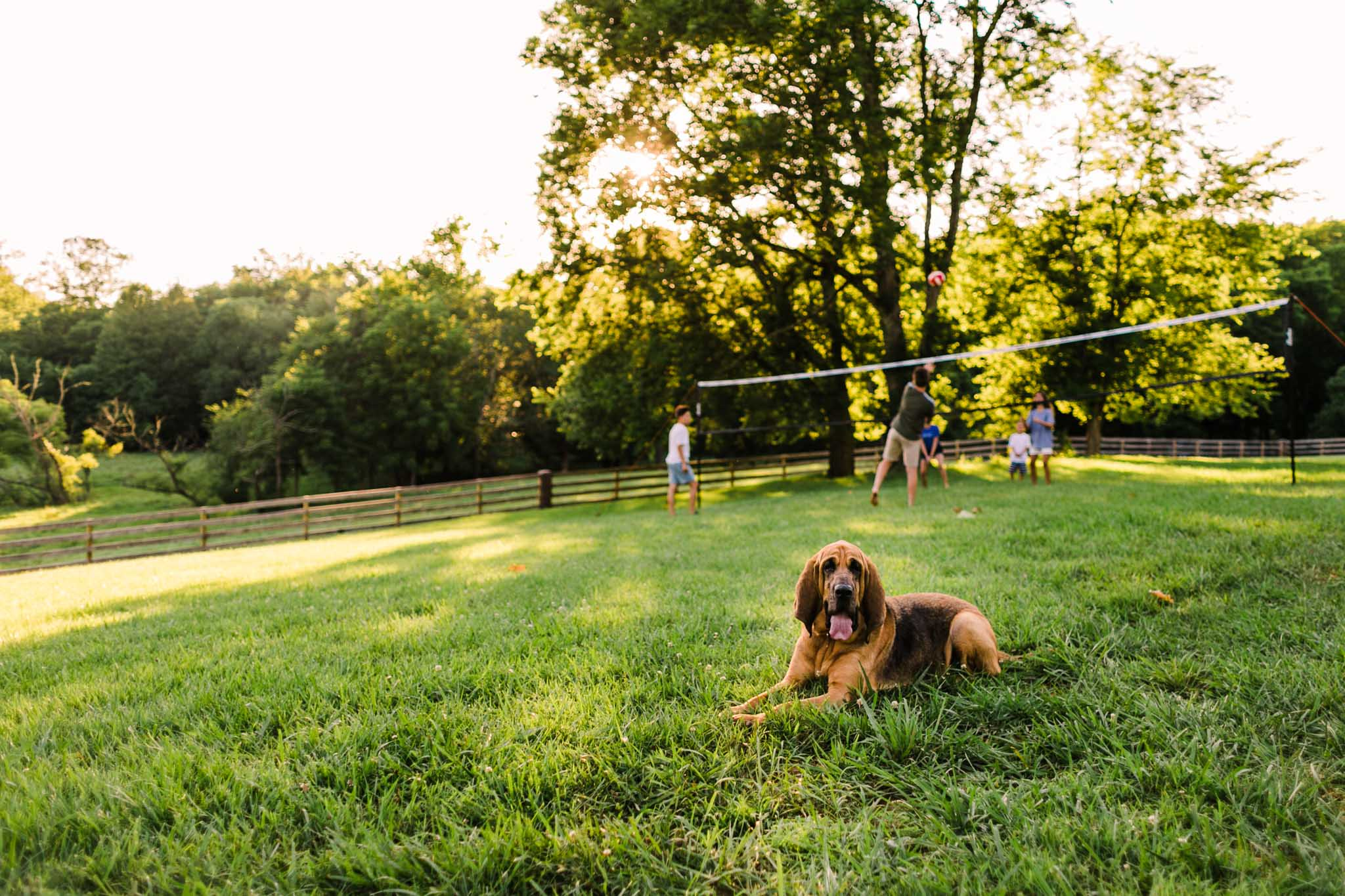 Durham Family Photographer | By G. Lin Photography | Bloodhound sitting on grass