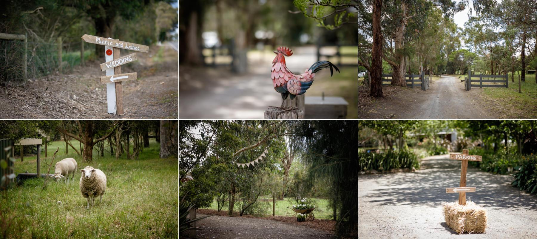 026 Minnie and Lachie Blog-001.jpg