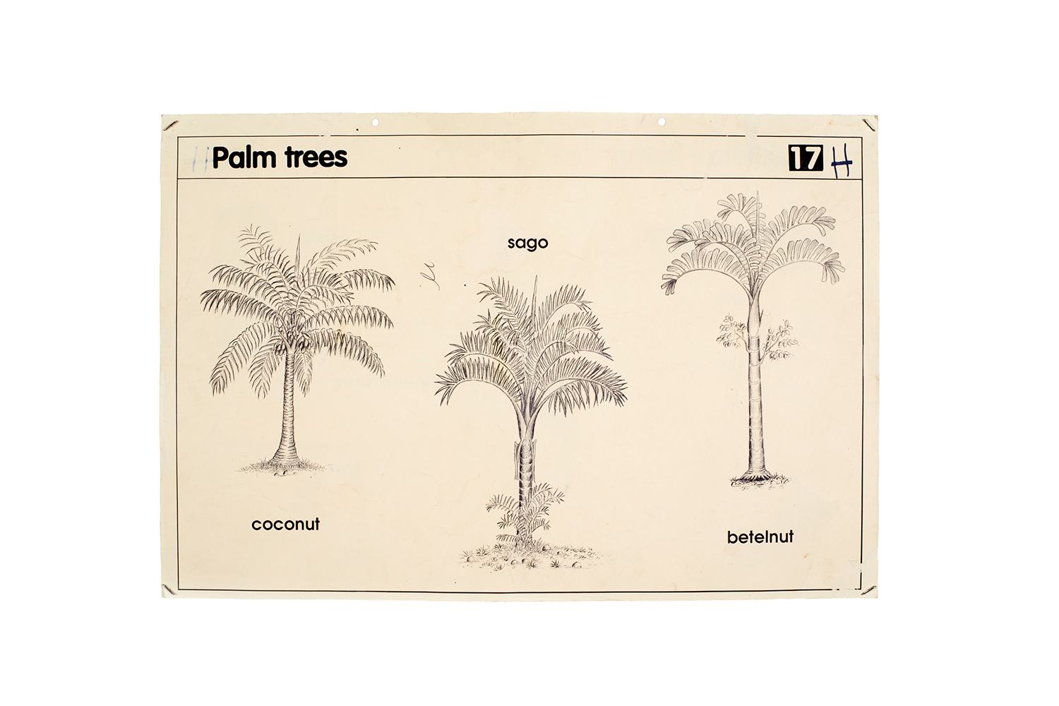 Palm-trees,-educational-poster-WEB.jpg