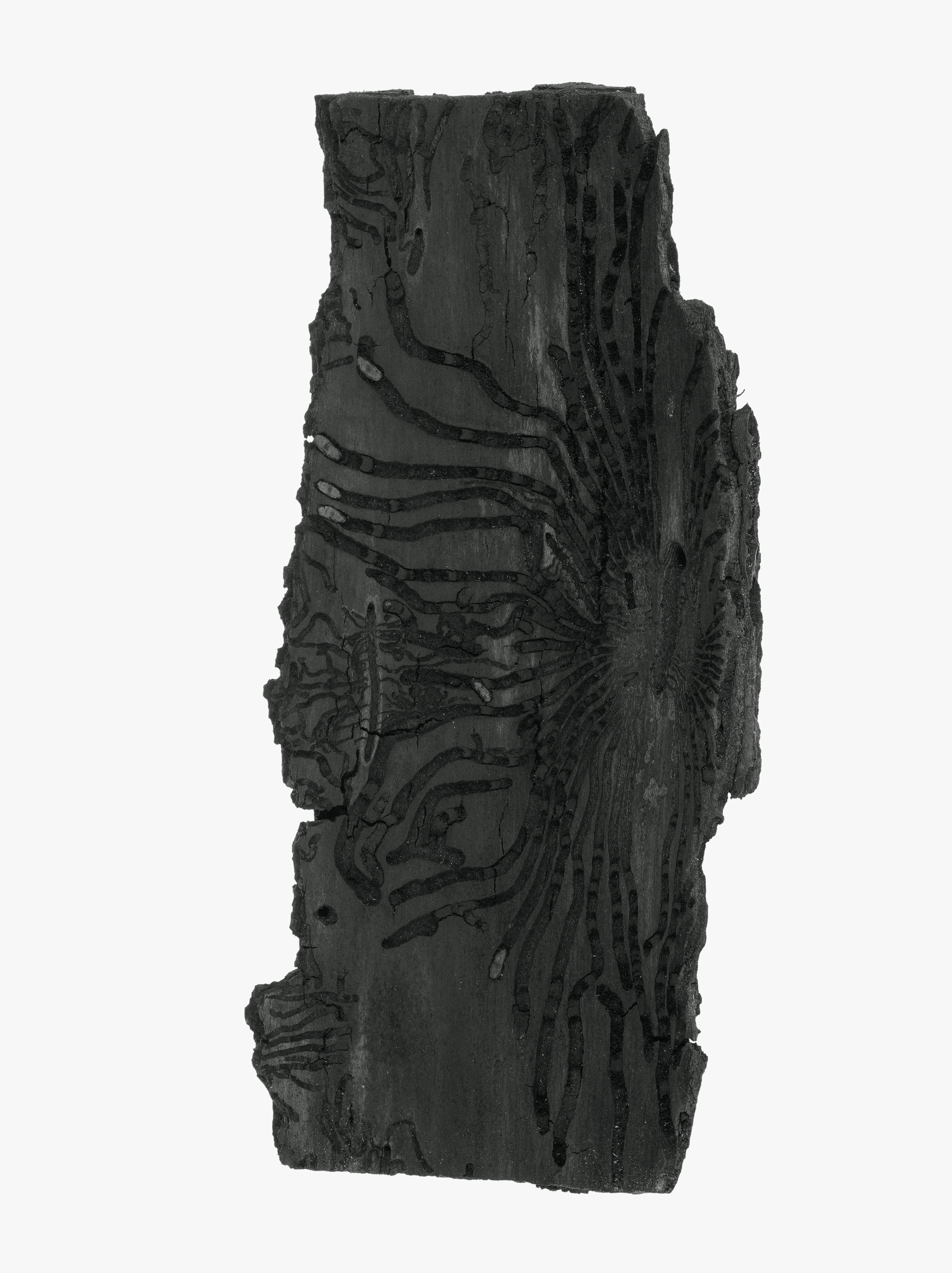 The reverse side of tree bark.jpg
