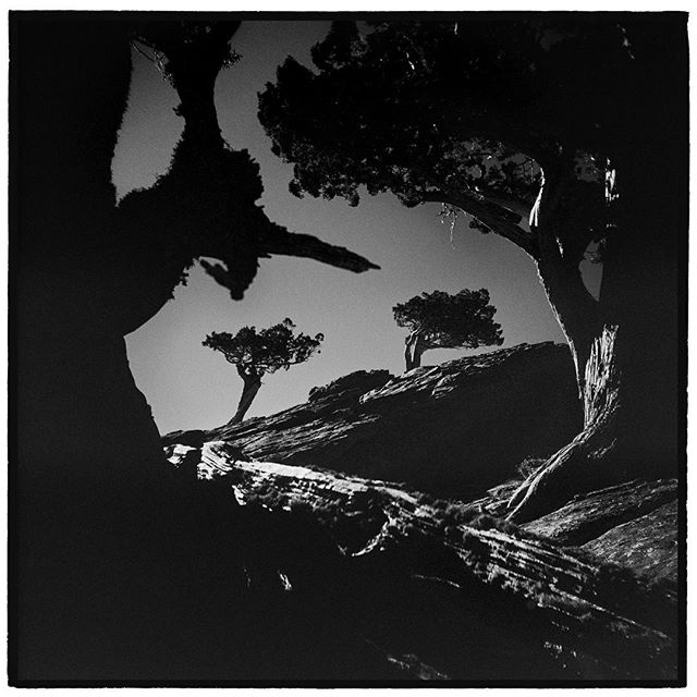 Not all great scenes are on far away trips. Sometimes the peak behind your house holds treasures. Sierra Junipers, Donner Peak, California. * * * * * @mypubliclands @usinterior #mypubliclands #keepitpublic #protectourpubliclands #findyourpark #usinterior #protectthewild #aperturefoundation #lensculture #blackandwhite #holga #filmisnotdead #mediumformat #filmphotographic #documentary #truckee #afar #thegreatoutdoors #wildernessculture #americanwest