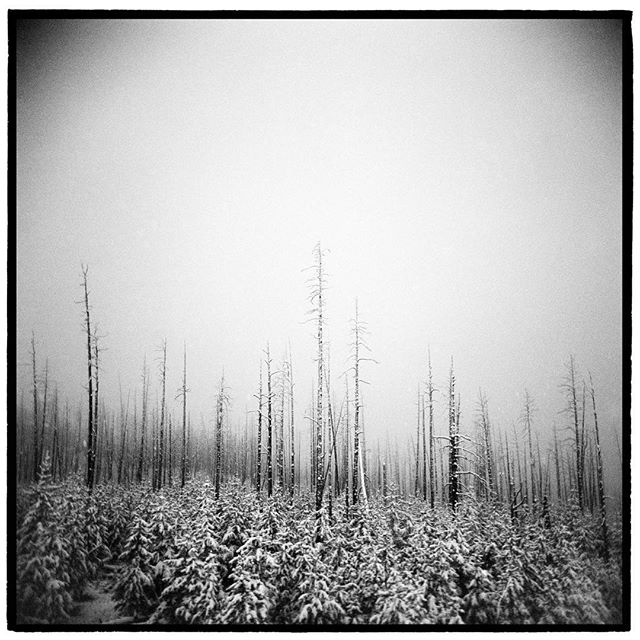 First snow of the year in the burned out forest of Dunraven Pass, Yellowstone National Park, Wyoming. * * * * * @mypubliclands @usinterior #mypubliclands #keepitpublic #protectourpubliclands #findyourpark #usinterior #protectthewild #aperturefoundation #lensculture #blackandwhite #holga #filmisnotdead #mediumformat #filmphotographic #documentary #yellowstonenationalpark #Wyoming #afar #thegreatoutdoors #wildernessculture #americanwest