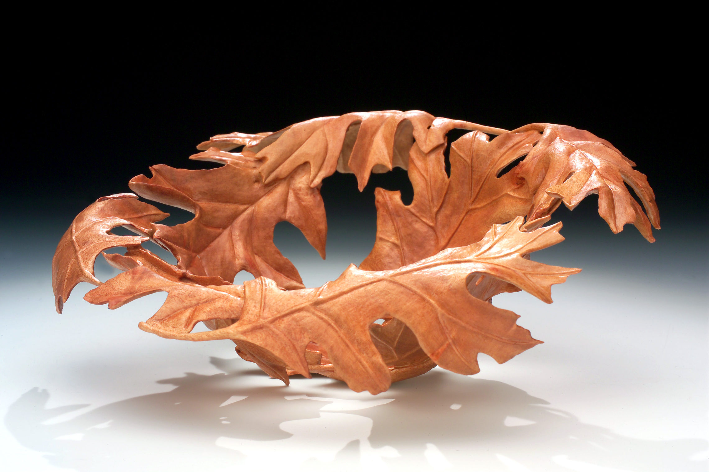 Quercus rubra: African sumac