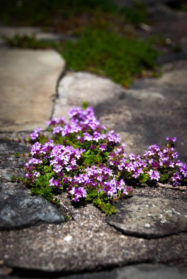 Cornell Botanicals Garden - Photo by Donna Angley