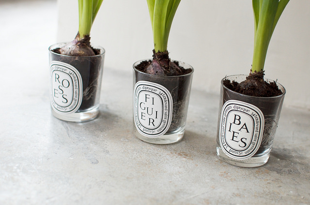 LOVE this idea about planting bulbs in none other than one of our all time favorite candle lines,  Diptyque ! (anyone know where this image came from? would love to tag the owner)