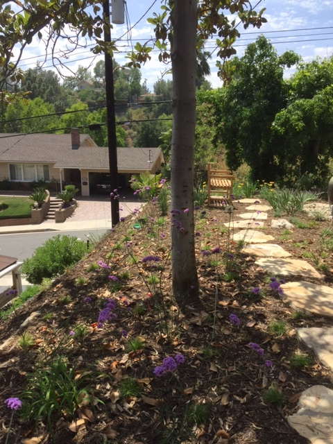 Side yard with flagstone step stones through a meadow of Berkley Sedge and Purple Top Verbena. Design by Good Living Gardens.