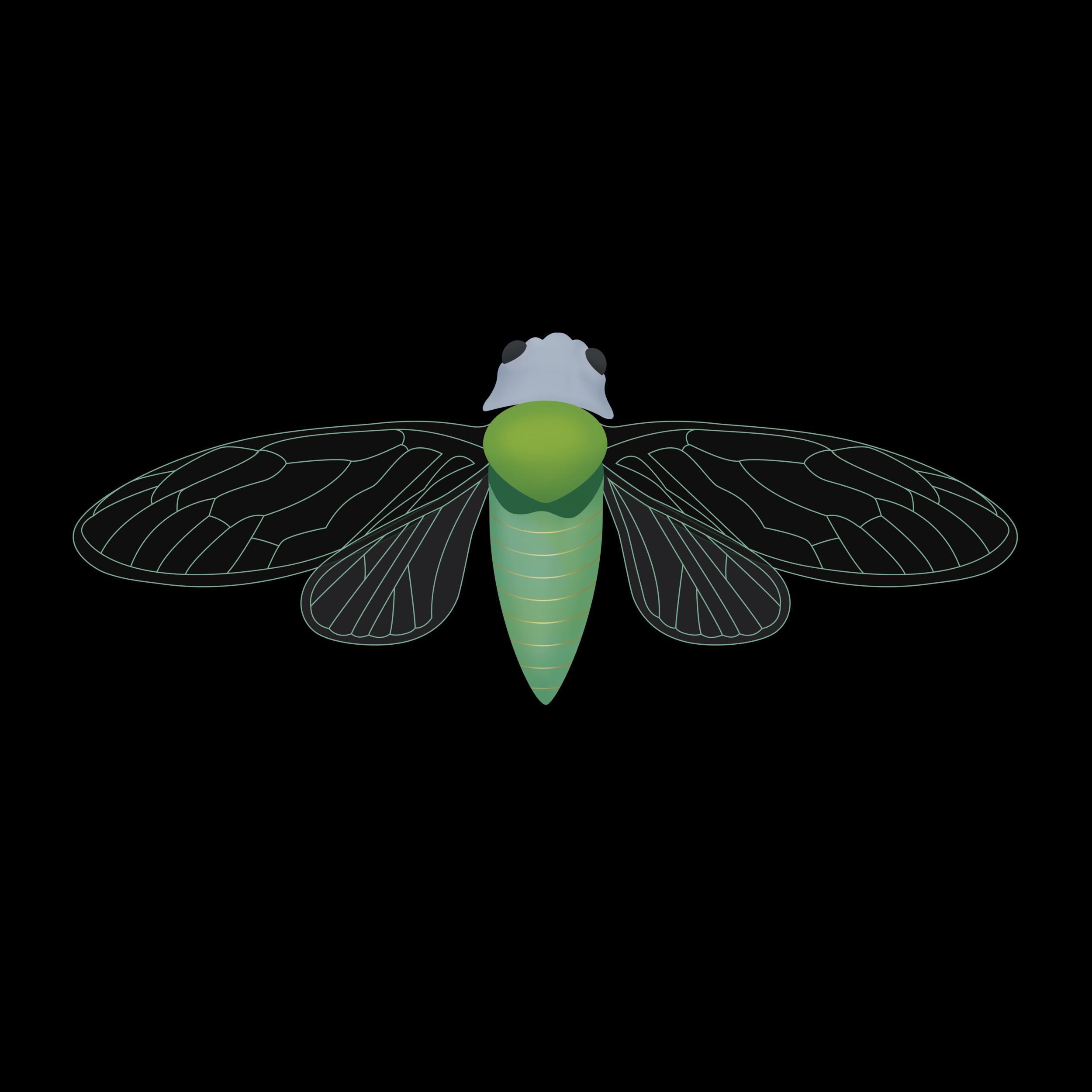 Cicada_v1+2.png