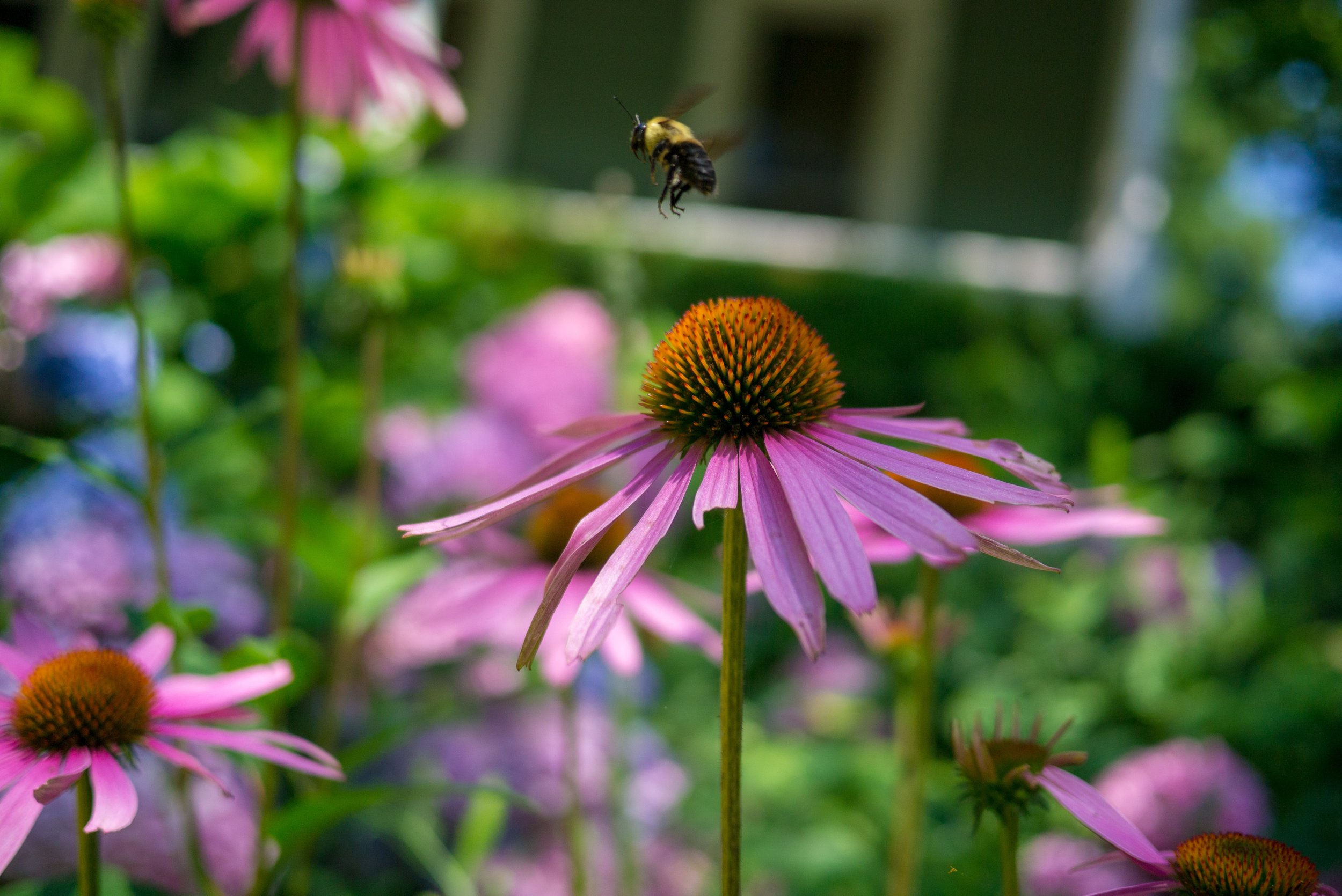 city-of-light-consulting-buffalo-flowers-bee.jpg