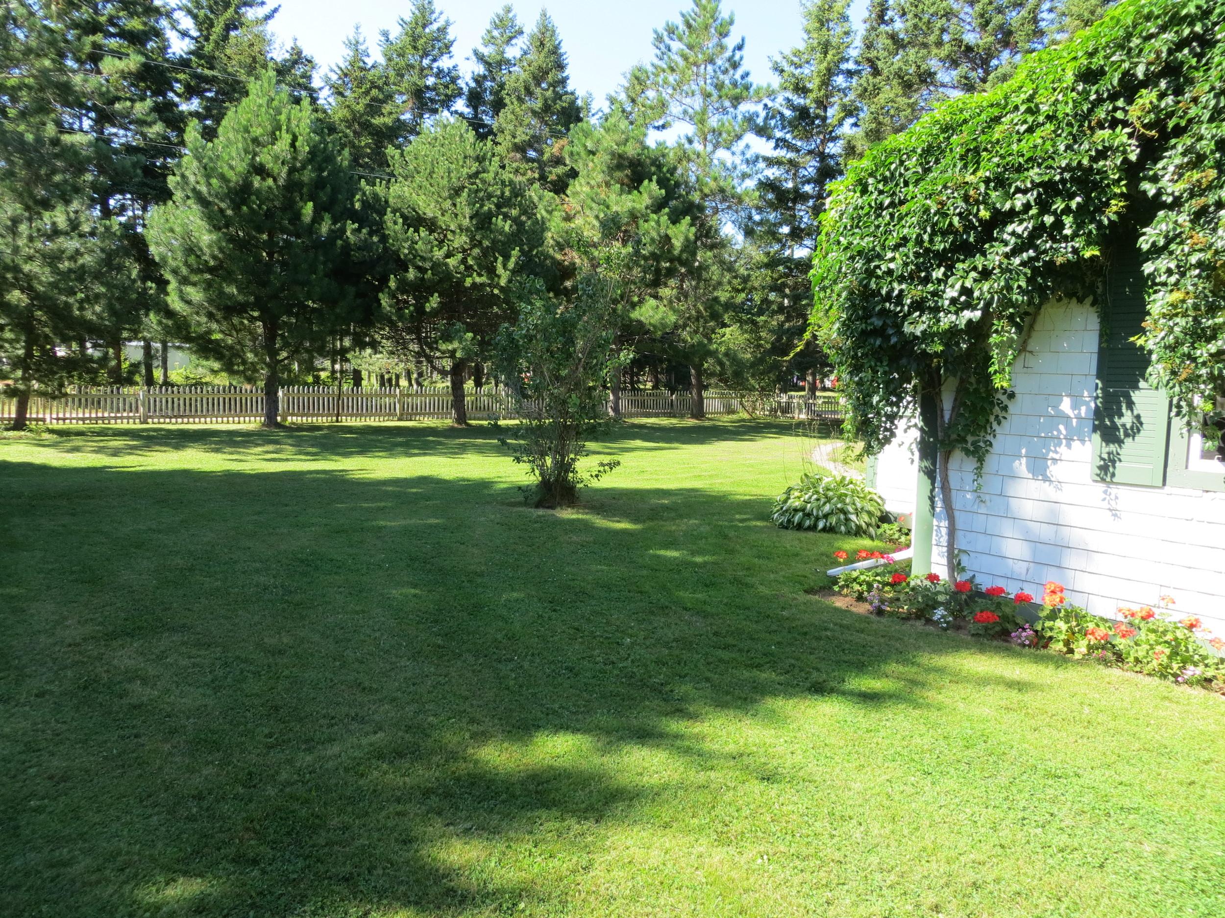 Spruce side yard