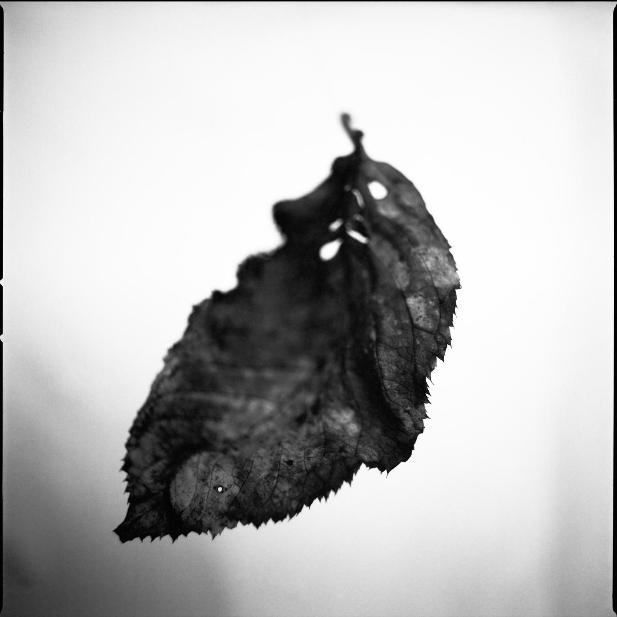 leaf on film