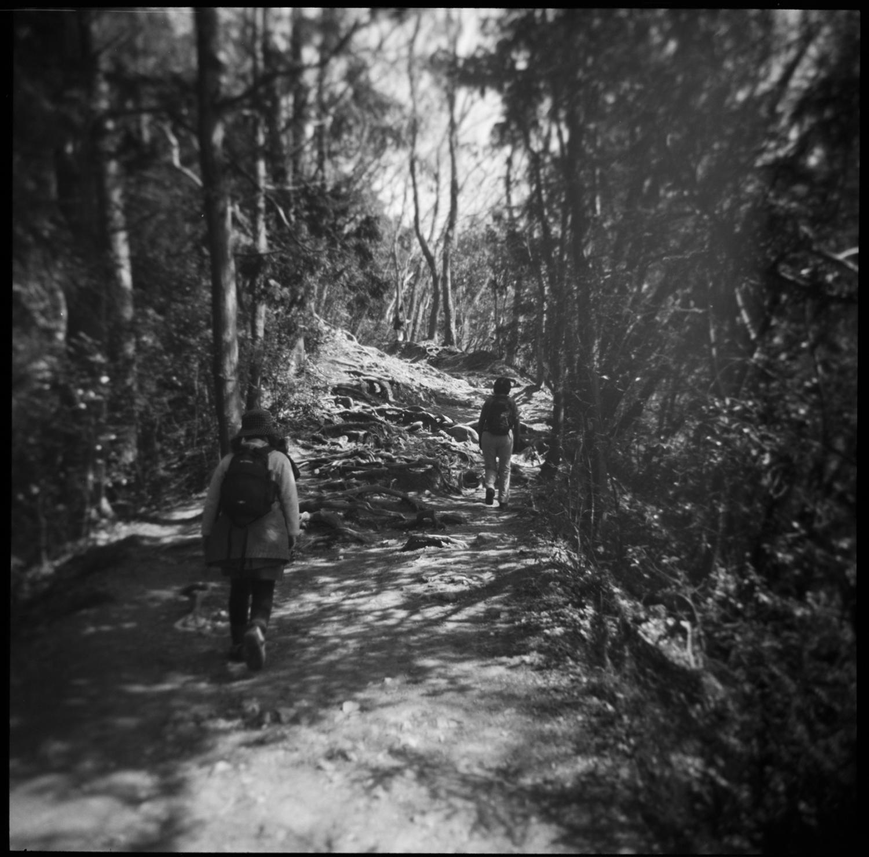 walking-the-path.jpg