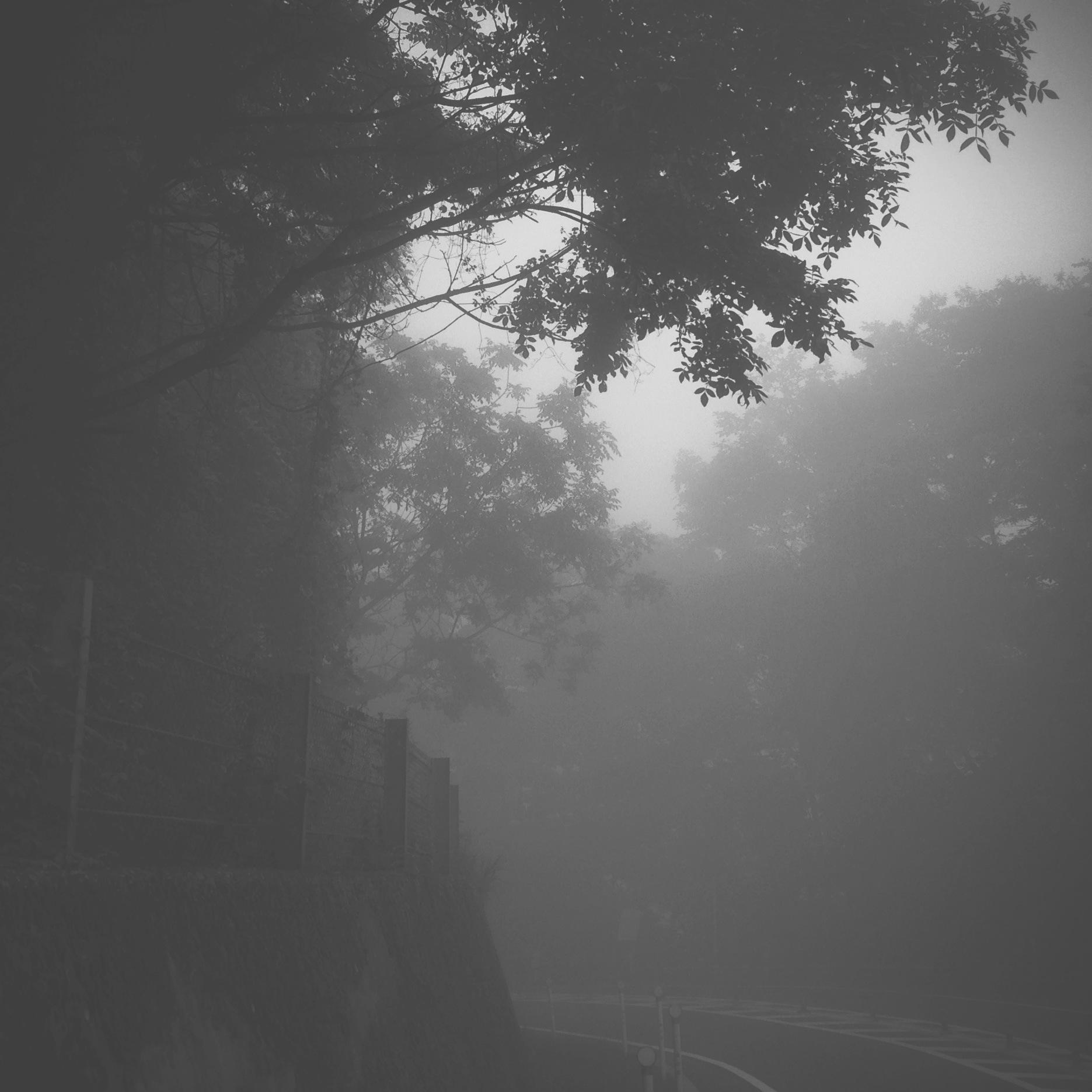 都民の森 mist at 7am.