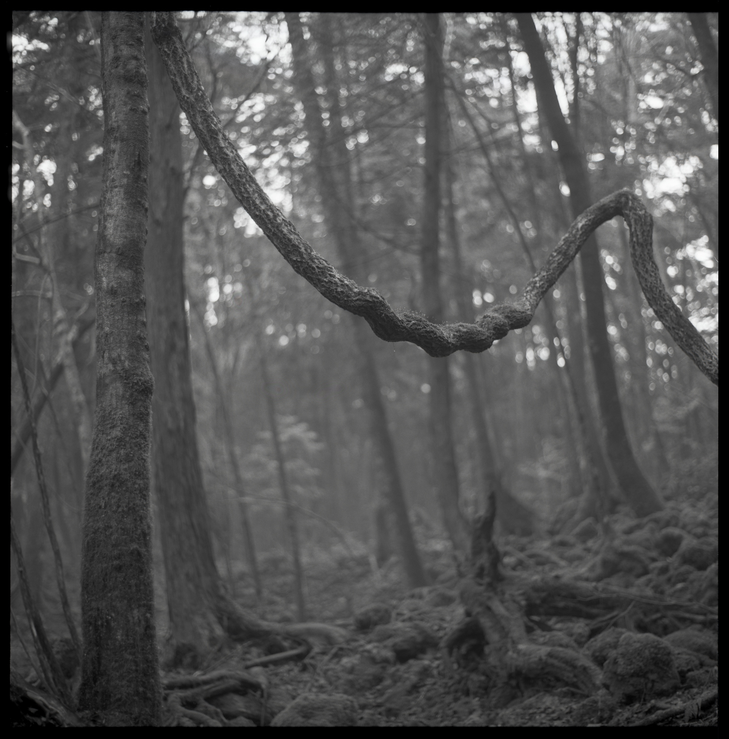 forest-bw-16.jpg