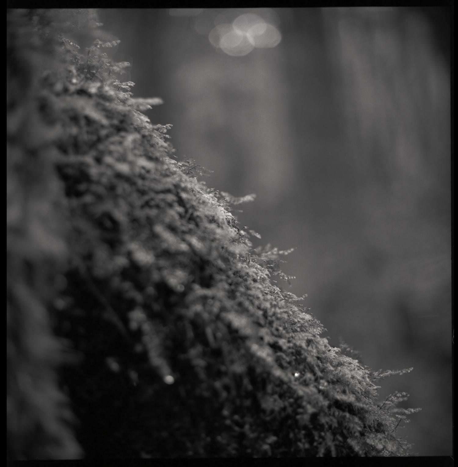 forest-bw-12.jpg