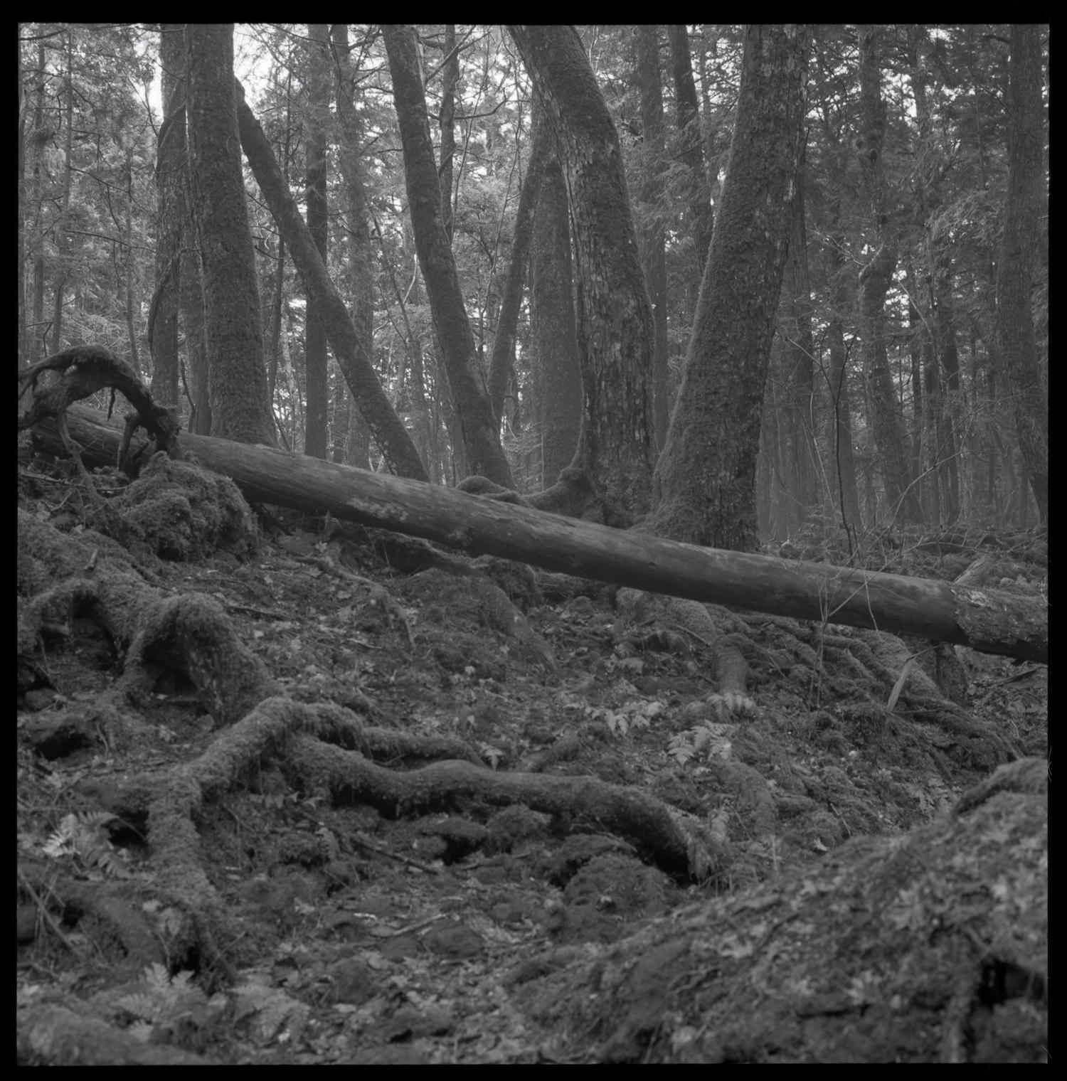 forest-bw-15.jpg