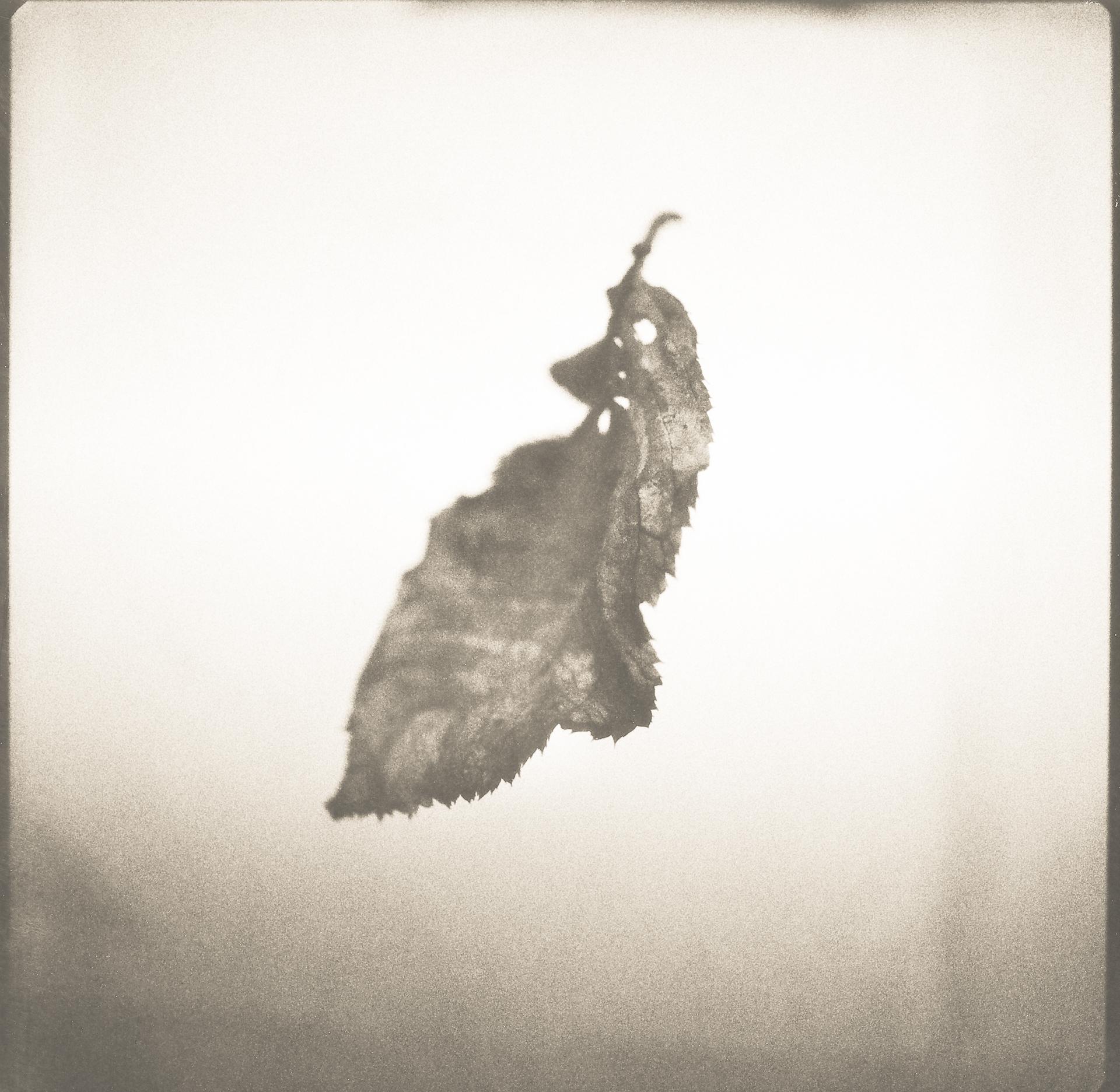 leaf-polaroid-bw1.jpg