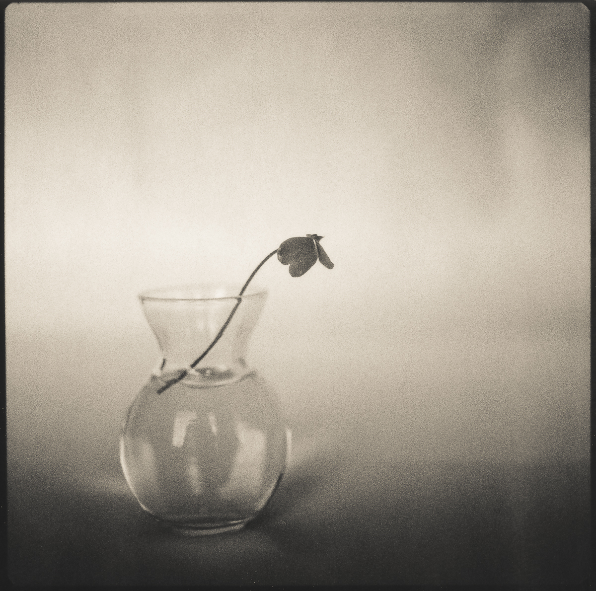 Clover-in-jar-polaroid-bw1.jpg