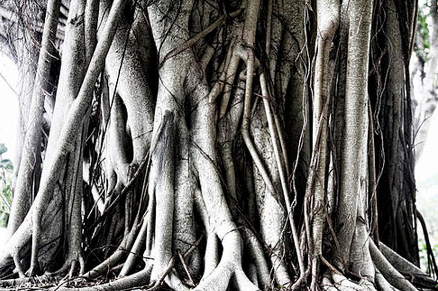 Mangrove_Bar_Inspiration 2.jpg