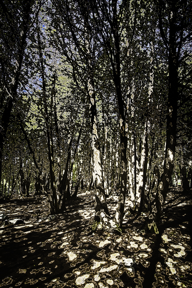 Elora Trees - $22512